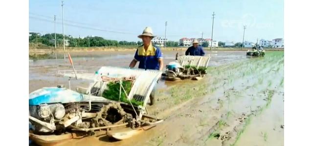 江西:紧急调拨237万公斤种子用于灾后恢复生产