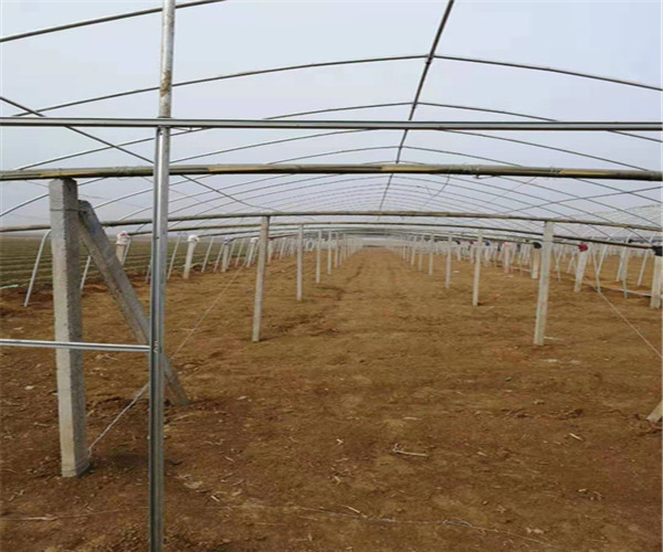 渭南新型钢架大棚省时省力--五洲农业科技